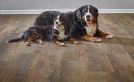 Stainmaster PetProtect hard-surface flooring