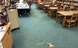 library carpet before renovation