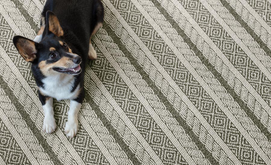 Unleashed carpet collection