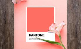 Pantone-CotY2019