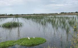 Invista-Victoria-Wetland